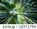 竹林 新緑 竹の写真 18371784