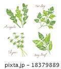 ハーブ 植物 葉のイラスト 18379889