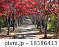 紅葉 道 木の写真 18386413