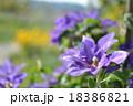 花畑 18386821