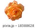 白抜きのバラ 18388628