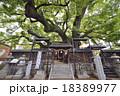三島神社 薫蓋樟 神社の写真 18389977