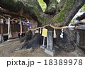 三島神社 薫蓋樟 楠の木の写真 18389978