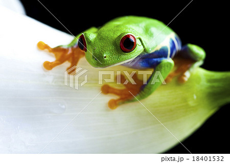 Frog in the jungle on colorful background