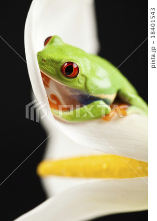 Exotic frog on colorful background