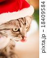 猫とクリスマスの服 18409584