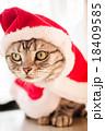 猫とクリスマスの服 18409585