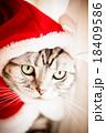 猫とクリスマスの服 18409586