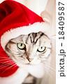 猫とクリスマスの服 18409587