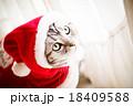 猫とクリスマスの服 18409588