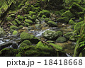 白谷雲水峡 原生林 渓流の写真 18418668