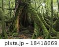 屋久杉 巨樹 屋久島の写真 18418669