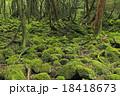 白谷雲水峡 原生林 苔の写真 18418673