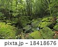 白谷雲水峡 原生林 苔の写真 18418676