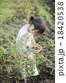 ブルーベリー 女の子 収穫の写真 18420538