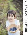 子供 ブルーベリー 女の子の写真 18420543