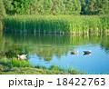 湖 景色 風景の写真 18422763