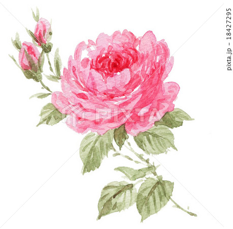 rose151104pix7 18427295