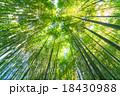 静寂の竹林 18430988