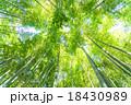 静寂の竹林 18430989