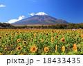 花の都公園 秋ヒマワリと富士 18433435