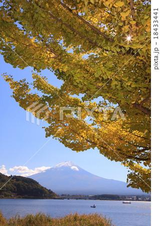 河口湖 イチョウと富士山 18433441