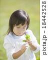 四ツ葉のクローバーを探す女の子 18442528