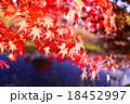 紅葉 18452997