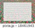 ポストカード チューリップ 18461943