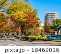 街路樹 紅葉 けやき通りの写真 18469016