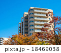 街路樹 マンション 紅葉の写真 18469038