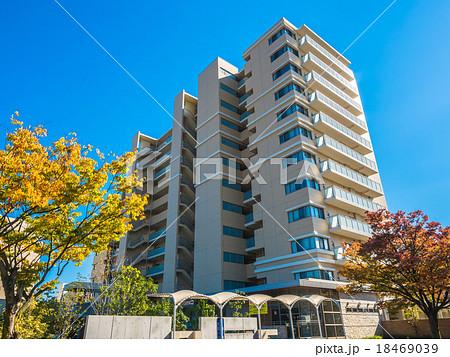 紅葉したケヤキの街路樹とマンション 18469039