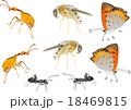 昆虫素材春 18469815