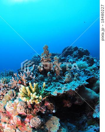 種類 サンゴ サンゴの種類
