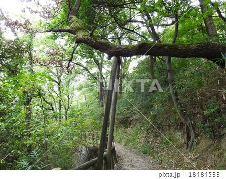 東大阪~生駒山ハイキングコース 18484533