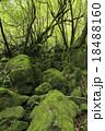 6月初夏 屋久島の苔むす森ー白谷雲水峡の原生林 18488160
