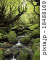 6月初夏 苔むす白谷川ー屋久島の白谷雲水峡 18488169