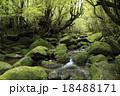 6月初夏 苔むす白谷川ー屋久島の白谷雲水峡 18488171