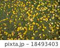Fallen yellow leaves on lawn 18493403