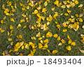 Fallen yellow leaves on lawn 18493404