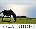 都井岬 18510348