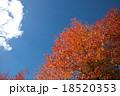 紅葉と青空 18520353
