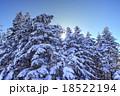 樹氷の森 18522194