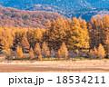 【栃木県・日光国立公園】秋の小田代ヶ原 18534211
