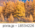 【栃木県・日光国立公園】秋の小田代ヶ原 18534226