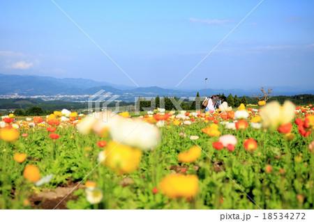 ポピーの花畑で記念写真 18534272