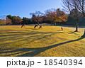 奈良公園の飛火野 18540394