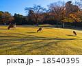 奈良公園の飛火野 18540395