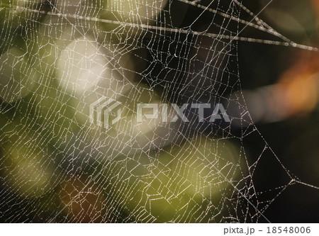 クモの糸 18548006