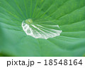 蓮 葉 水の写真 18548164